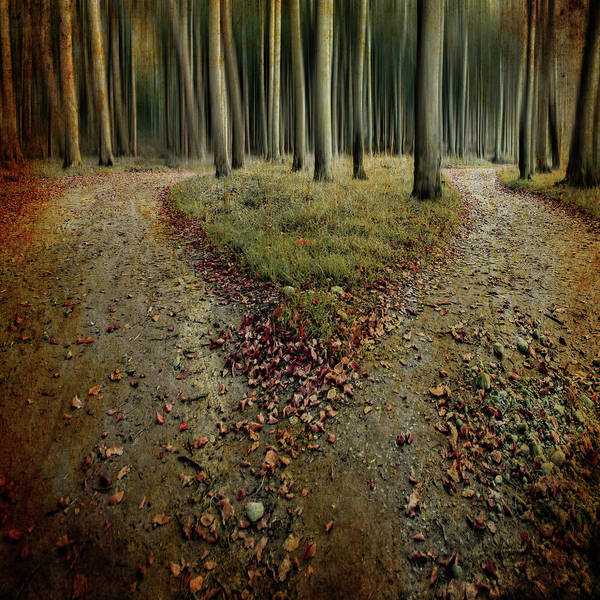 Wall Art - Photograph - [another Lonely Heart In Haunted Woods] by Mario Benz