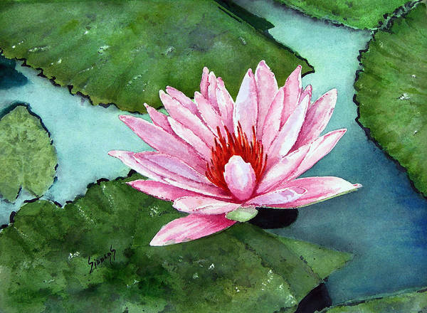 Painting - Another Water Lily by Sam Sidders