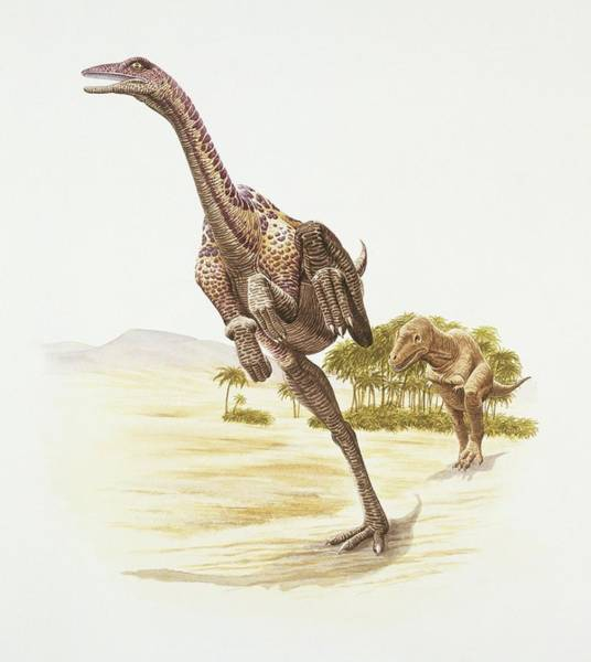Chase Photograph - Anserimimus by Deagostini/uig/science Photo Library
