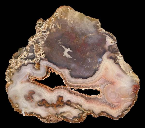 Geodes Photograph - Antelope Agate by Natural History Museum, London/science Photo Library
