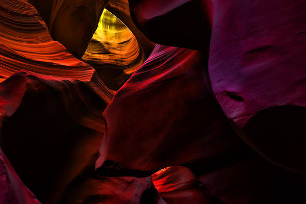 Photograph - Antelope Colors by Evie Carrier