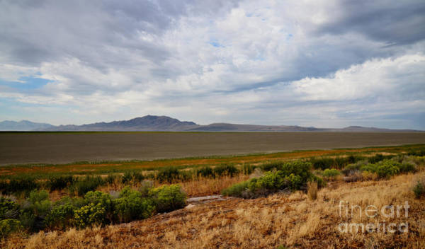 Photograph - Antelope Island  by Donna Greene