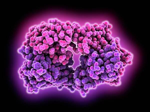 Protein Wall Art - Photograph - Anti-rotavirus Antibody by Laguna Design