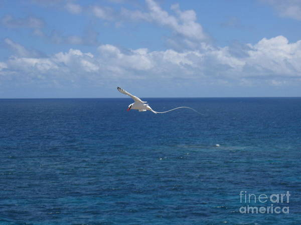 Antigua - In Flight Art Print