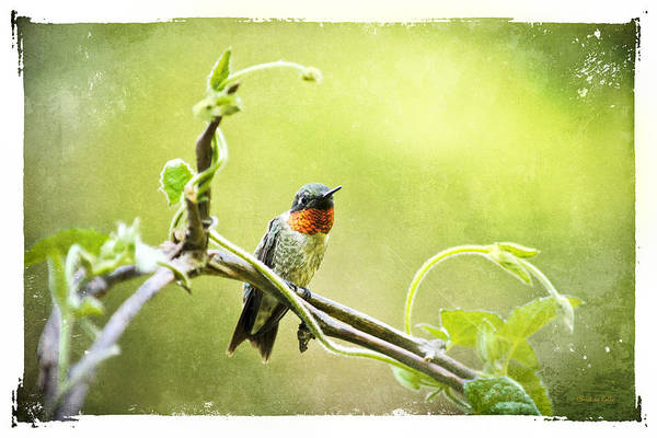 Mixed Media - Antique Hummingbird Postcard No. 9038 by Christina Rollo