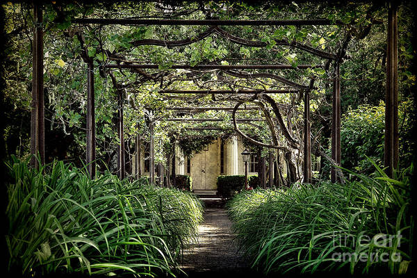 Arbor Photograph - Antique Pergola Arbor by Olivier Le Queinec