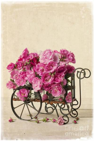 Photograph - Antique Rose Cart by Edward Fielding