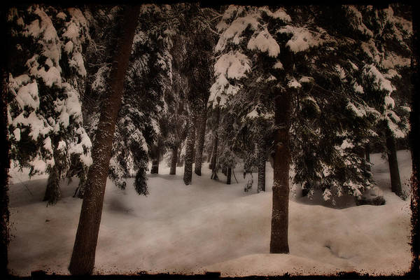 Photograph - Antique Woodscape by Roberto Pagani