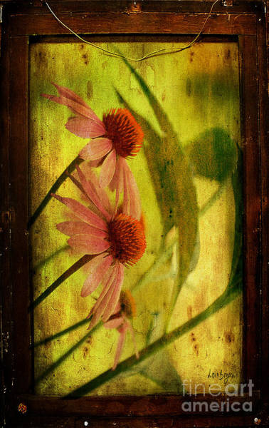 Photograph - Antiqued Cone Flowers by Lois Bryan