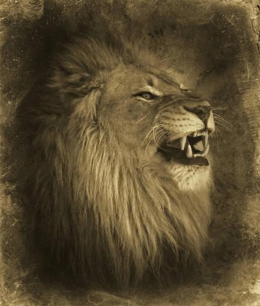 Photograph - Antiqued Lion by Elaine Malott