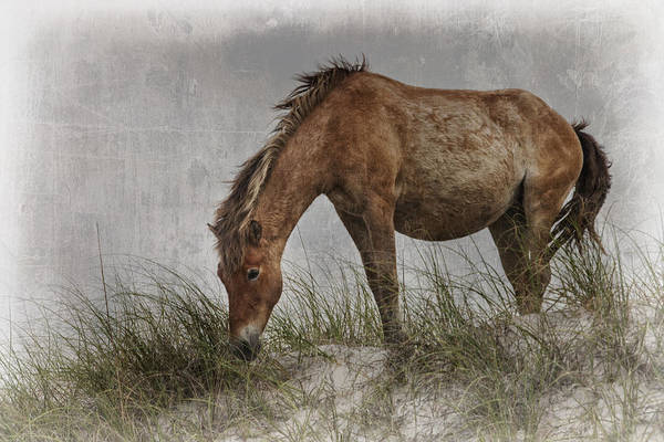 Photograph - Antiqued Wild Horse  by Bob Decker