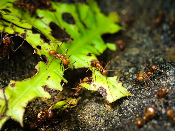 Photograph - Ants At Work by Tyler Lucas