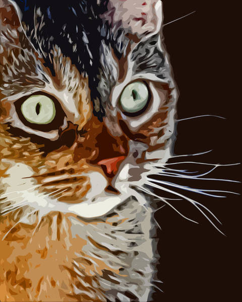 Tan Cat Wall Art - Photograph - Anya Cat by David G Paul