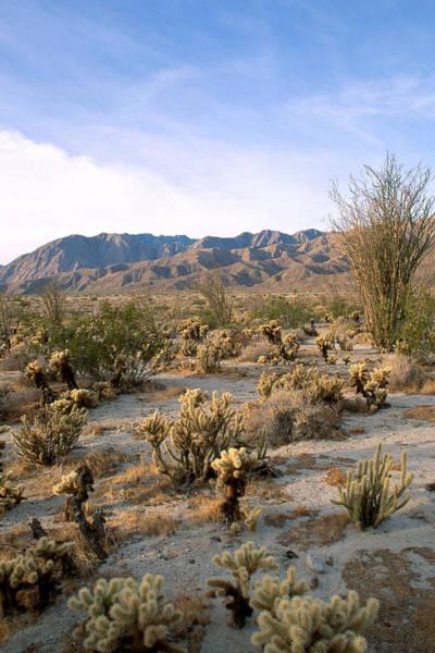 Wall Art - Photograph - Anza-borrego Desert, California by David Weintraub