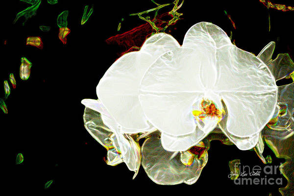 Photograph - Aos White Orchid 1 by Janis Lee Colon