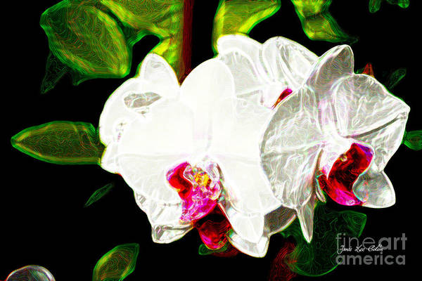 Photograph - Aos White Orchid 2 by Janis Lee Colon