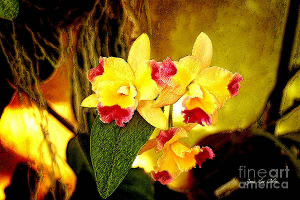 Photograph - Aos Yellow Orchid 1 by Janis Lee Colon