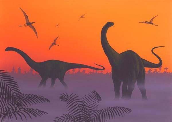 Palaeozoology Wall Art - Photograph - Apatosaur Dinosaurs by Richard Bizley