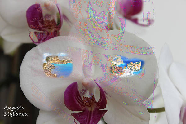 Photograph - Aphrodites Birth Place In A Flower by Augusta Stylianou