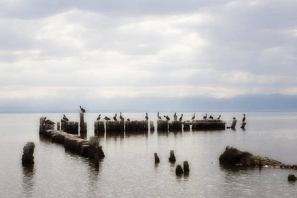 Sonny Bono Wall Art - Photograph - Apostles Of The Salton Sea by Hugh Smith