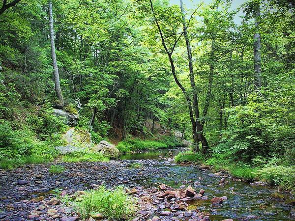 Photograph - Appalachian Creek I I by Paulette B Wright
