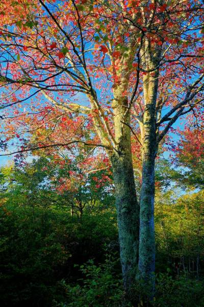 Photograph - Appalachian Fall Trees by Carol Montoya