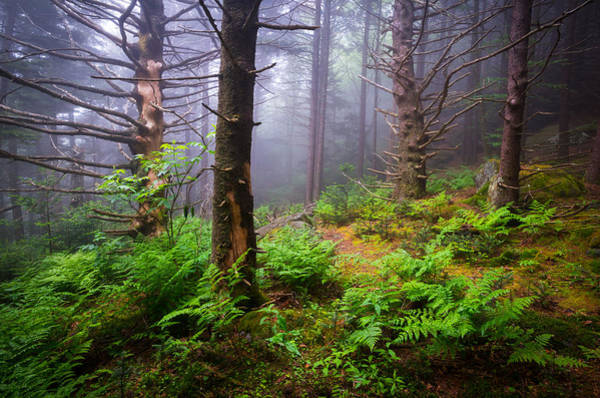 Photograph - Appalachian Trail Blue Ridge Mountains Nc Forest by Dave Allen