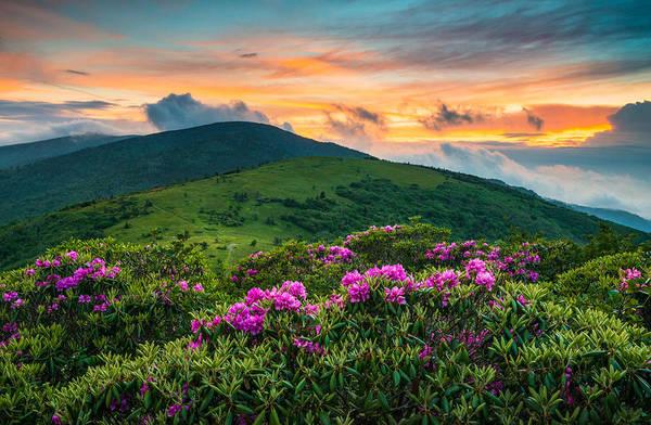 North Carolina Photograph - North Carolina Appalachian Trail Roan Mountain Highlands by Dave Allen