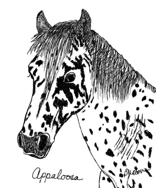 Appaloosa Drawing - Appaloosa by Becky Mason