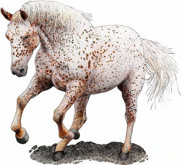 Photograph - Appaloosa Horse by Roger Hall