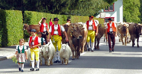 Photograph - Appenzell Parade Of Cows by Ginger Wakem
