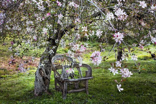 Wall Art - Photograph - Apple Blossom Shower by Debra and Dave Vanderlaan