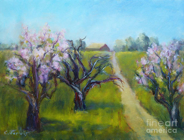 Painting - Apple Blossom Time by Carolyn Jarvis