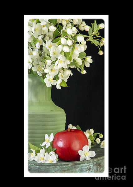 Photograph - Apple Blossoms Card by Edward Fielding