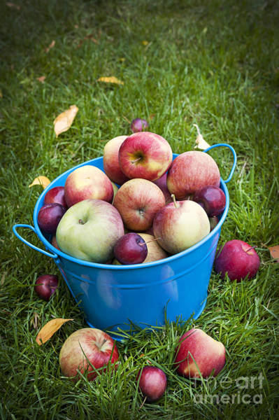 Pick Photograph - Apple Harvest by Elena Elisseeva