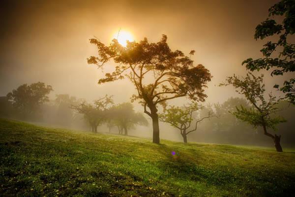 Canon Eos 6d Photograph - Apple Orchard In Fog  by Jakub Sisak