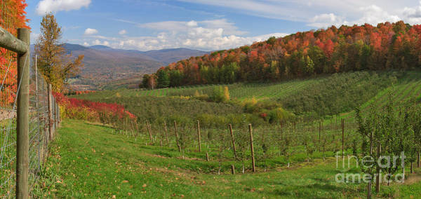 Photograph - Apple Orchard Panorama by Charles Kozierok
