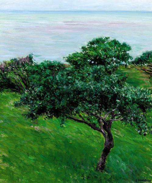 Tranquility Painting - Apple Trees By The Sea Trouville by Gustave Caillebotte
