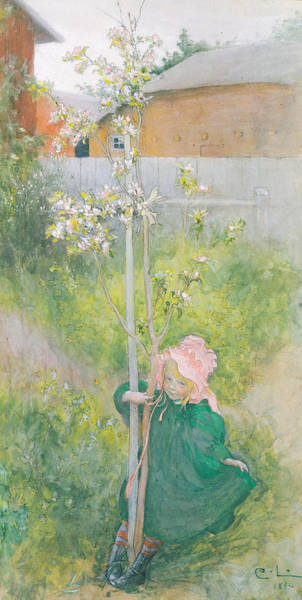 Nordic Painting - Appleblossom by Carl Larsson