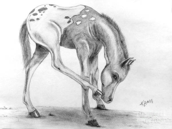 Appaloosa Drawing - Appy Foal by Kami Catherman