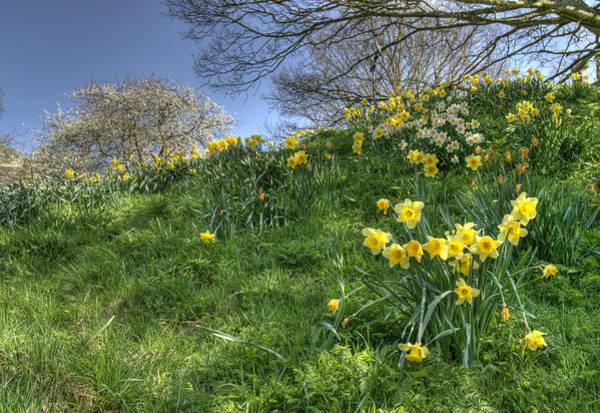 Photograph - April Morning by David Birchall