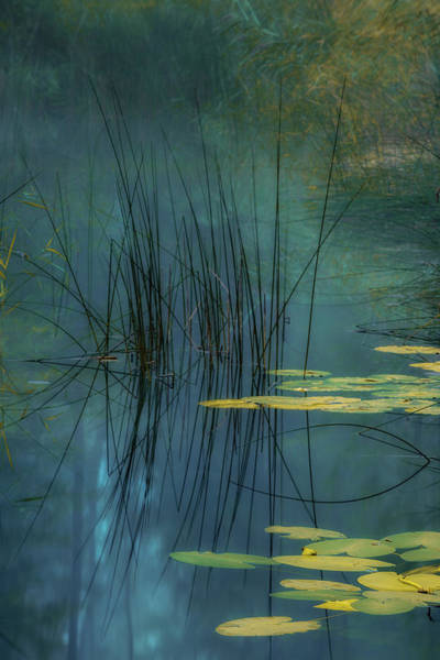 Pond Wall Art - Photograph - Aqua by Andreas Agazzi