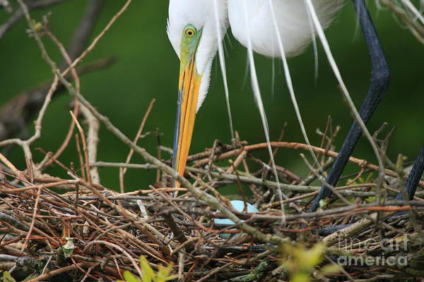 Photograph - Aqua Egg Nest by John F Tsumas