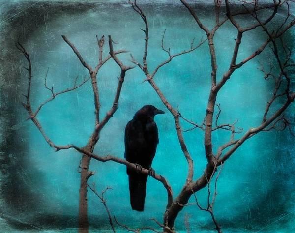Raven Digital Art - Aqua Twilight by Gothicrow Images