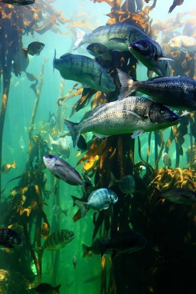Photograph - Aquarium by Aidan Moran