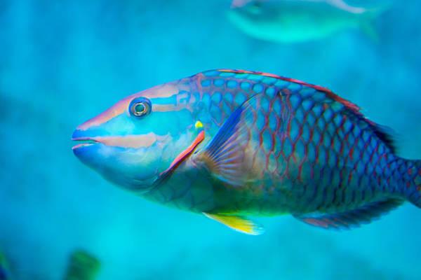 Photograph - Aquarium Fish by Gene Norris