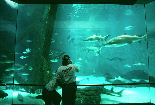 Us Marines Photograph - Aquarium by Paul Avis/science Photo Library