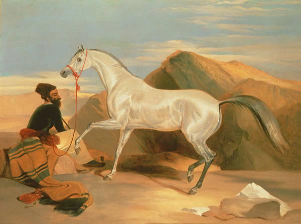 Landseer Wall Art - Painting - Arab Stallion by Sir Edwin Landseer