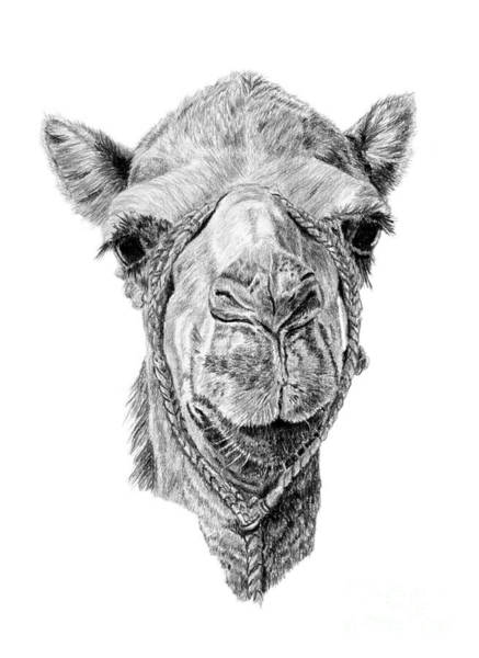 Drawing - Arabian Beauty by Pencil Paws