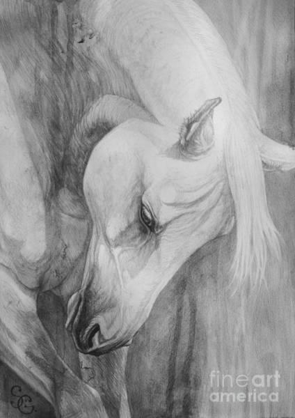 White Horse Painting - Arabian Gentleness by Silvana Gabudean Dobre